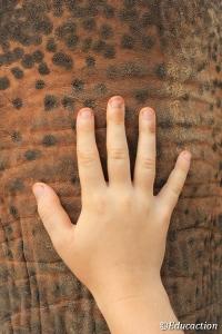 Mano de Ishi sobre Elefante