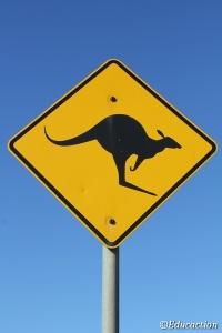 Canguro, símbolo de Australia